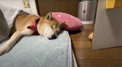 スヤスヤ寝ています
