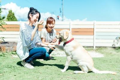 女性と遊ぶ犬