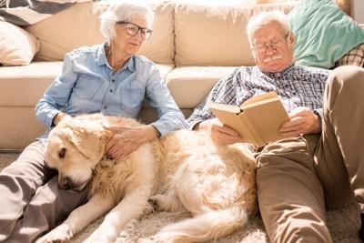 本を読む老夫婦とゴールデンレトリーバー
