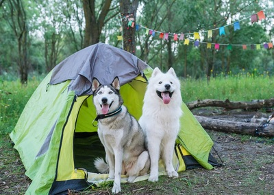 テントの入り口に座る2頭の犬