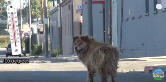 歩き去る犬