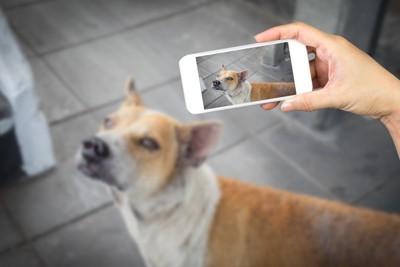携帯で写真を取られる犬