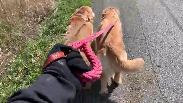 二匹の犬の後ろ姿