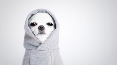 パーカーを着ている犬