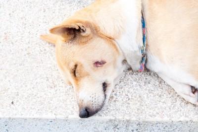 頬をケガしている犬