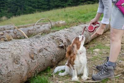 指示を受ける犬