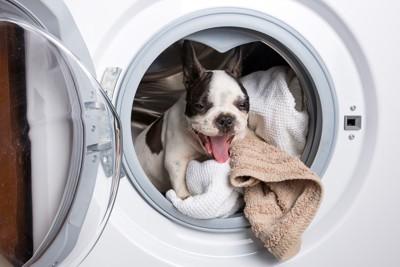洗濯機の中でタオルで喜ぶ犬