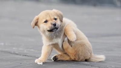 脇の辺りを痒がる子犬