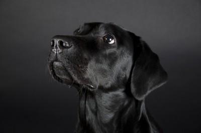 飼い主をみつめる犬