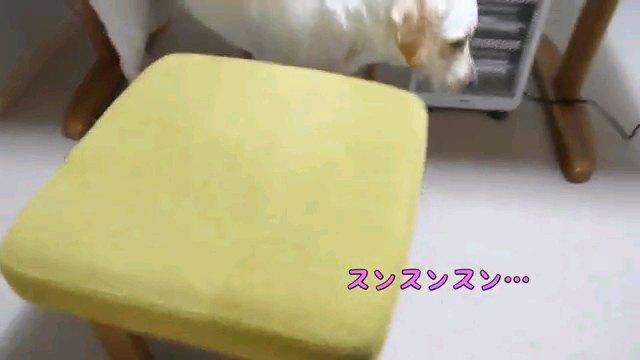 スンスンスン…~字幕