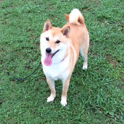 芝の上にいる犬