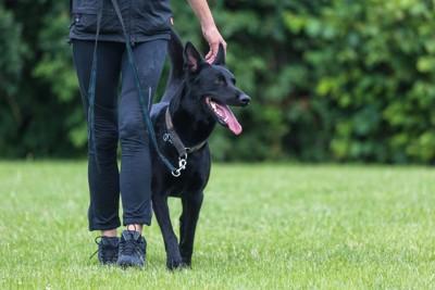 飼い主に寄り添って歩く犬