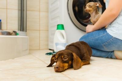 犬と人、そして洗剤