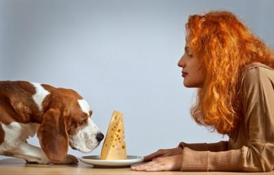 チーズが気になる犬