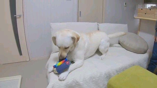 オモチャで遊ぶ犬