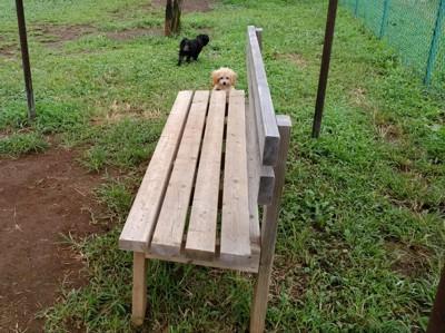 ベンチと犬