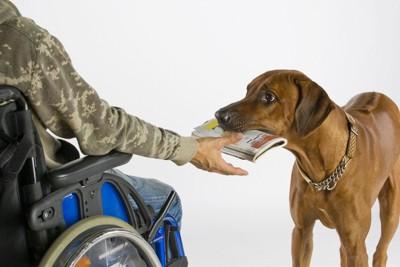 車椅子に乗っている人のところに物を持ってくる犬