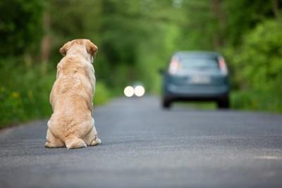 進む車を見つめながら座っている犬
