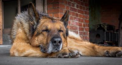 道で昼寝をする犬