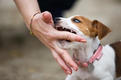 飼い主の指を噛もうとする犬
