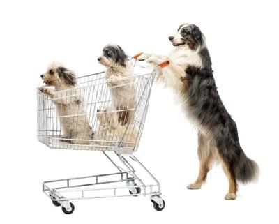 犬がショッピング