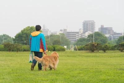芝生を散歩する犬