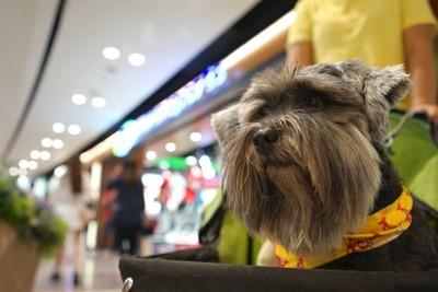 ショッピングモールでバギーに乗っている犬