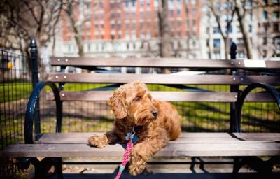 公園のベンチに座るリードをつけた犬