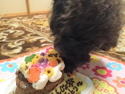 誕生日ケーキを食べるエマさん