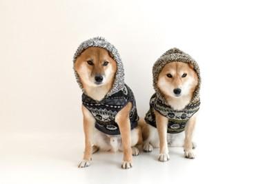 パーカーを着て座る二匹の柴犬