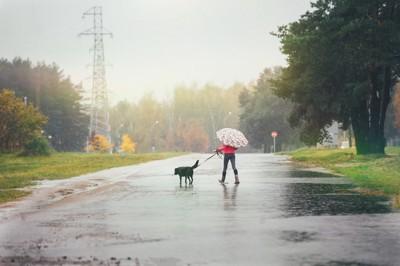 雨の中、お散歩する黒い犬と女性