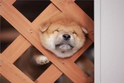 頭が柵から抜けなくなってしまった子犬