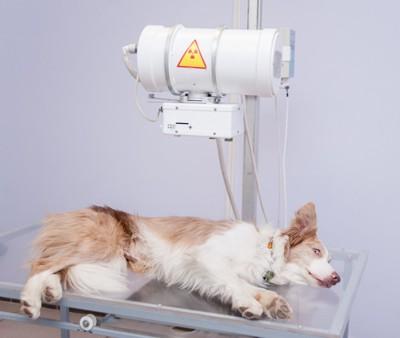 検査を受ける犬