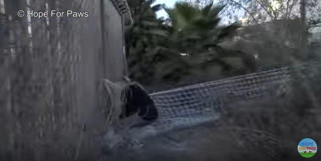 網にかかった母犬
