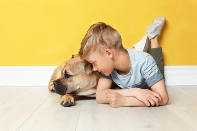 家の中で遊ぶ子供と寝そべる犬