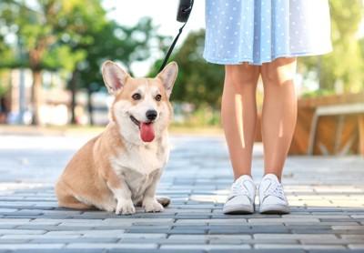 立ち止まる人と犬