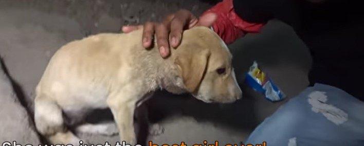 顎の下が腫れている子犬