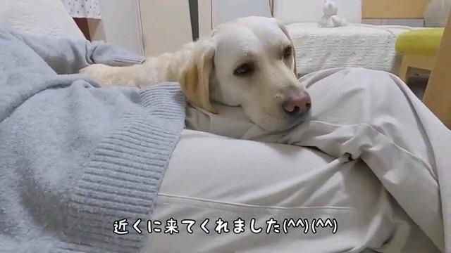 近くに~字幕