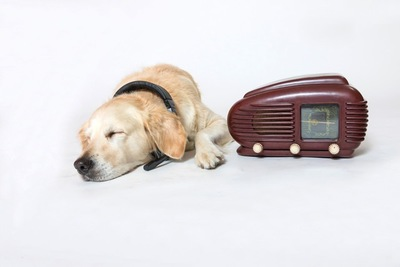 ゴールデンレトリーバーとラジオ