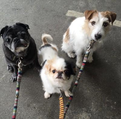 3匹のわんこ