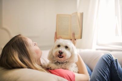 女性のお腹の上の白い犬