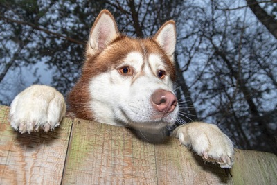 塀から見下ろす犬