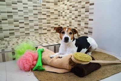 犬とお風呂場グッズ