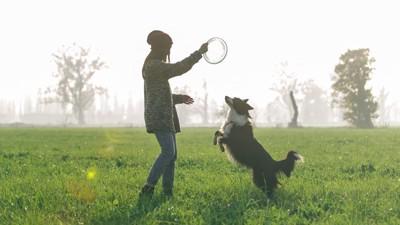 飼い主と遊ぶ犬