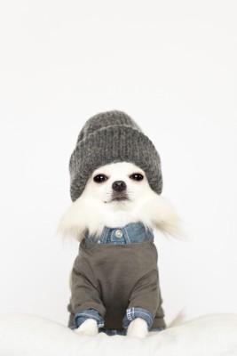 洋服と帽子を着た犬