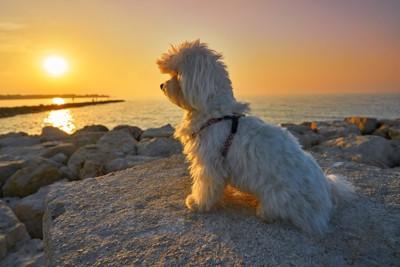 海辺で遠くを見つめる犬