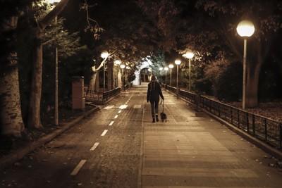 夜の街を歩く犬と女性