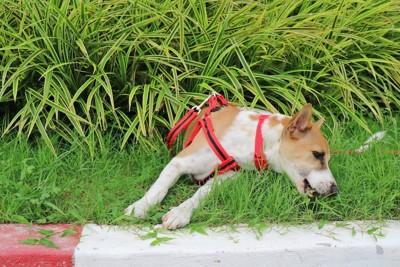 散歩中に拾い食いをしようとする犬