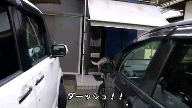 ダーッシュ!!~字幕