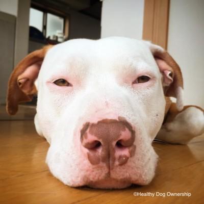正面を見る犬